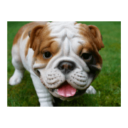 English Bulldog Statue Garden Ornament